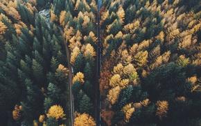 Обои лес, осень, деревья, дорога, природа, вид сверху