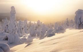 Картинка зима, свет, снег