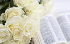 Картинка букет, бутоны, Белые розы