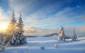 Картинка зима, лес, снег, природа, елки, forest, nature, winter, snow, fir trees