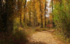Картинка дорога, осень, лес, листья, деревья, Вайоминг, США, Гранд-Титон, Grand Teton National Park