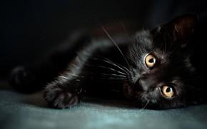 Обои Animal, Wild, Planet, Black, Beautiful, Cat, Tiger, Jaguar, Eyes, young, Animals, panther, Gato, Black Cat, ...
