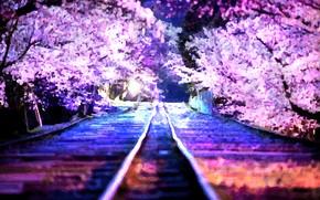 Картинка рельсы, весна, сакура