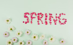 Картинка цветы, лепестки, белые, Хризантемы