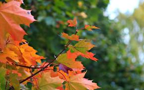 Картинка листья, парк, осень в парке