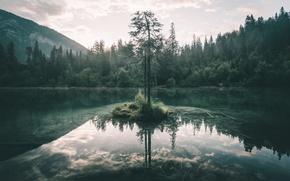 Картинка лес, небо, природа, озеро, дерево
