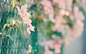 Картинка лето, цветы, забор, боке