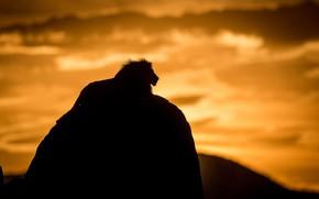 Картинка ночь, природа, лев