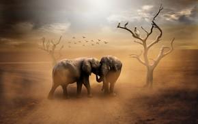 Обои дорога, пыль, слоны, птицы