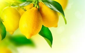Обои фрукт, листья, желтый, лимон, макро