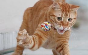 Картинка кошка, игра, рыжая, мячик, лапка, рыжий кот