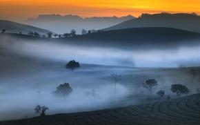 Картинка горы, туман, утро, чайная плантация