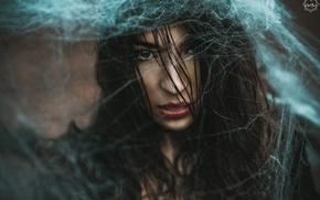 Картинка девушка, паутина, Silent Purr