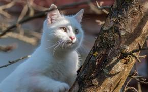 Картинка белый, кот, дерево