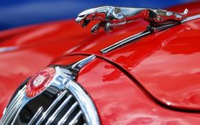 Картинка макро, красный, ягуар, Jaguar MK2