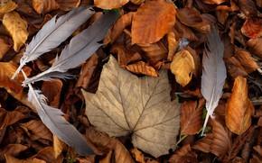 Обои листья, фон, перья