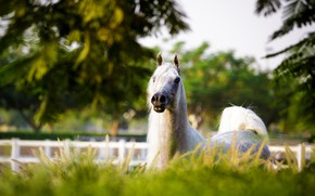 Картинка морда, конь, лошадь, грива, позирует