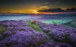 Картинка закат, цветы, горы, природа, луг, пейзаг