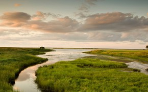 Картинка трава, река, ручей, болото, Канада, Шедьяк