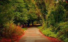 Картинка Деревья, Фонари, Парк, Дорожка, Park, Trees, Path