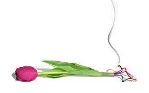 Картинка цветок, провода, тюльпан