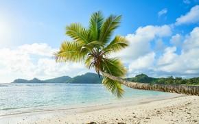 Картинка природа, пальма, отдых, остров, islands