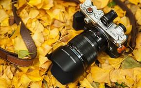 Обои листья, осень, фотоаппарат, Olympus, ремешок
