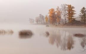 Картинка деревья, природа, туман, озеро, река, берег, дымка