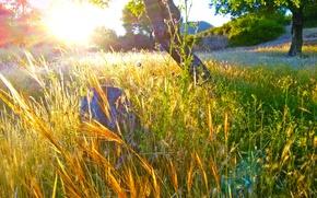 Картинка Spring, Greece, Fields, Dusk