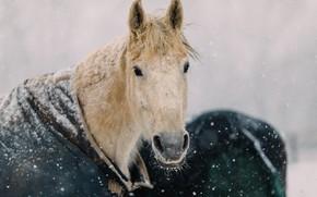 Картинка кони, снег, зима