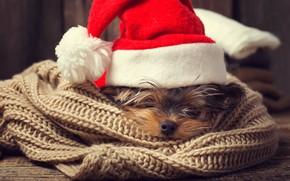 Обои собака, Xmas, Новый Год, символ 2018, Merry Christmas, 2018, Рождество, funny, cute, santa hat, Christmas, ...