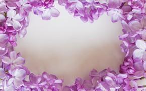 Картинка цветы, белый фон, сирень