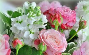 Картинка цветы, розы, бутоны, левкой