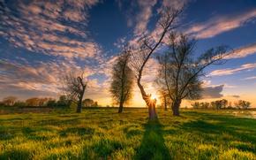 Картинка небо, трава, солнце, облака, деревья