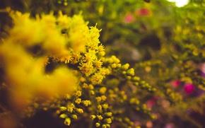 Картинка лето, макро, цветы, природа, настроения