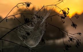 Обои макро, роса, паутина, утро