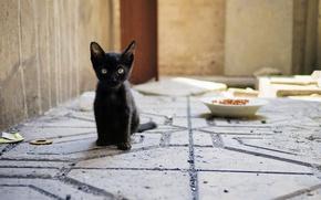Обои кошка, взгляд, котенок, фон, котёнок