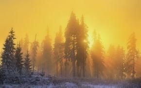 Обои лес, солнце, дымка, природа, зима, снег, свет, лучи, утро