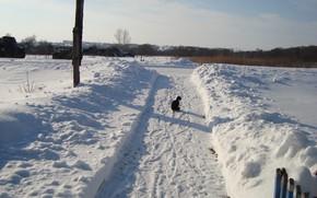 Картинка дорожка, кот на прогулке, зимний пейжаз
