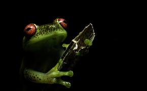 Картинка природа, фон, лягушка