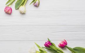 Картинка цветы, весна, colorful, тюльпаны, розовые, wood, pink, flowers, romantic, tulips, spring