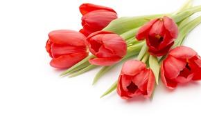 Картинка цветы, букет, red, fresh, pink, flowers, beautiful, romantic, tulips, красные тюльпаны