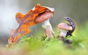 Картинка грибы, листок, ящерица, опята