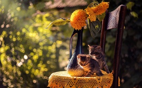 Картинка кошка, лето, кот, котята, боке