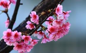 Картинка цветы, дерево, весна, цветущее дерево, веточки
