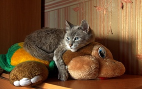Картинка blue eyes, Cat, animal, fun, situation, paws, fur, nose, sly, whiskers, feline, plush
