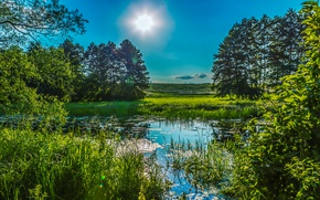 Картинка зелень, лето, небо, трава, солнце, деревья, пруд, камыши, Украина, Poltava