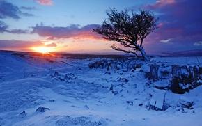 Картинка зима, снег, горы, восход, дерево, рассвет, Англия, England, Уэльс, Wales, Brecon Beacons National Park, Национальный …