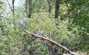 Картинка вода, деревья, природа, птица, крылья, клюв, речная крачка