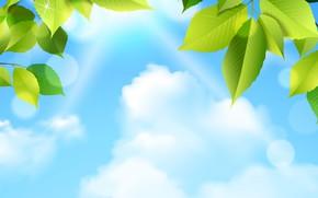 Картинка небо, Листья, Рендеринг